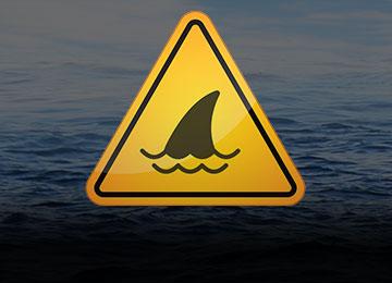 Uwaga rekin! strefa ryzyka!